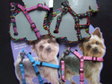 Puppy & Extra Small Dog Harnesses & Leads