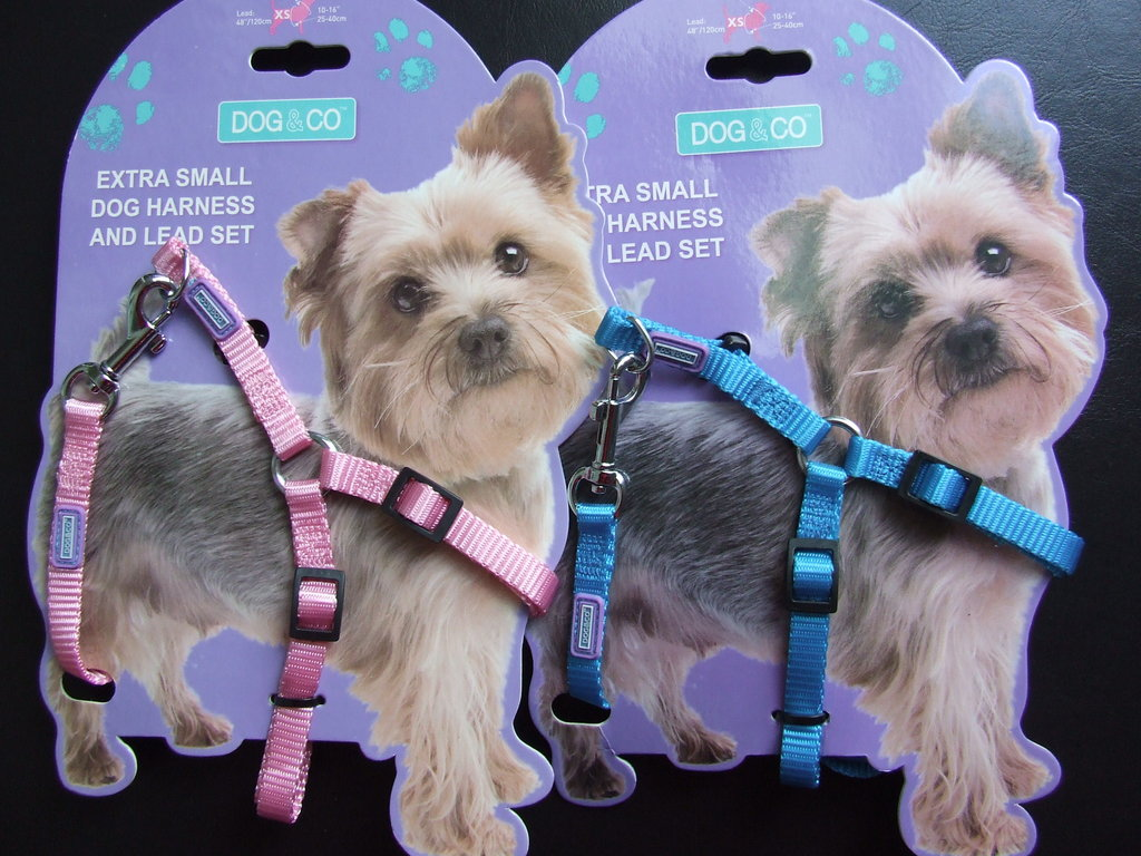 DOG & CO - Pink or Blue Puppy/XS Dog - Harness & Lead Set