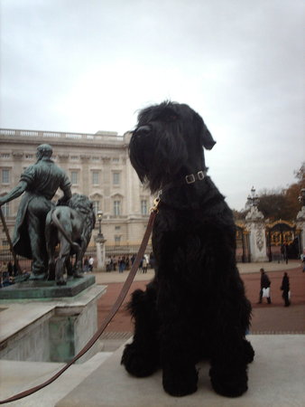 MY RUGER AT BUCKINGHAM PALACE - 2008\\n\\n20/01/2014 23:56