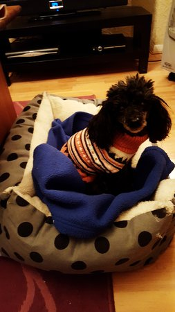 Abby sent in her piccy. She absolutely loves her new jumper\\n\\n04/01/2017 23:04