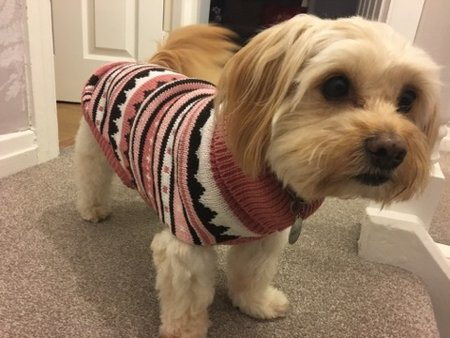 Beautiful Polly just loves her new jumpers!\\n\\n20/11/2016 21:27