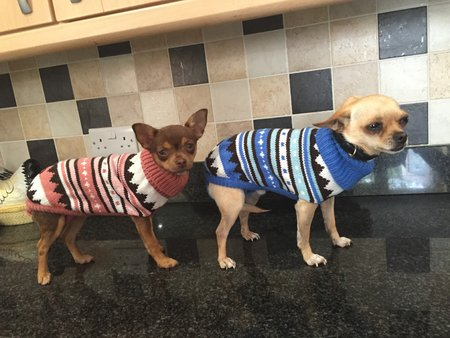 These two little darlings sent in their photos ready to keep warm this winter. 2015\\n\\n24/09/2015 14:24