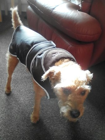 Ted's mum says, he's a rufty tufty terrier but just hates the rain & loves his new coat!\\n\\n06/01/2016 22:43