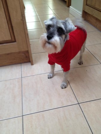 Barney sent in his picture looking warm and cosy in his new red Jumper. Winter 2015\\n\\n20/01/2015 13:59