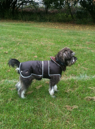 Here is Mycroft wearing his new coat for the first time\\n\\n21/10/2014 22:10