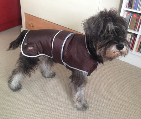 Mycroft sent in his picture, all ready for winter 2014.\\n\\n21/10/2014 22:09